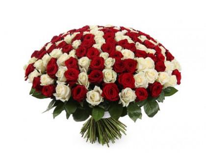 Букет из 101 белых и красных роз средней длины