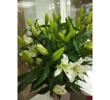 Лилия белая 5 цв.