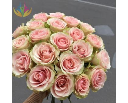 Роза Frutteto
