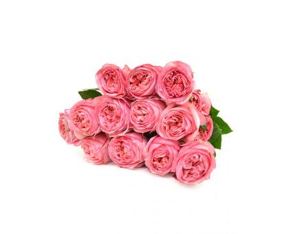 Роза Pink X-Pression