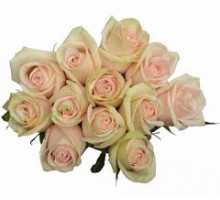 Роза Perla
