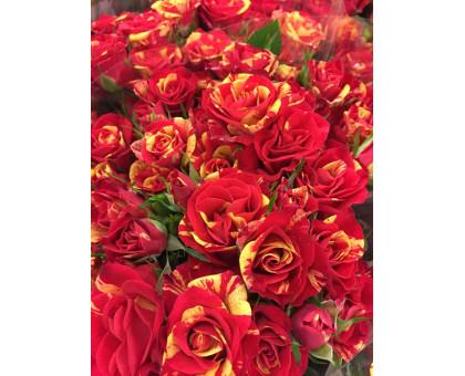 Роза кустовая Fire Flash