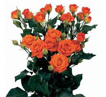 Роза кустовая Orange Babe