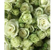 Роза кустовая Green Glow